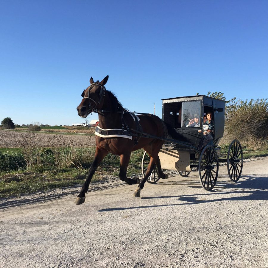 Photo by: PAM ORTEGA  An Amish family ride their horse and buggy down a dirt road in Kalona, Iowa.